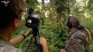 Download Video Cendrawasih the Bird of Paradise, Papua - Indonesia MP3 3GP MP4
