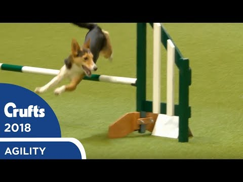 Agility - Kennel Club British Open Final (Agility) Part 1 | Crufts 2018