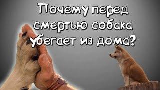 Факты о собаках. Почему перед смертью собака убегает из дома?