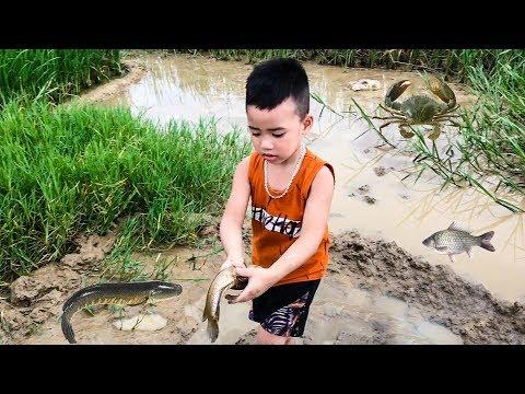 Minh Khoa Ra Đồng Bắt Cá - Bắt Cua ❤ Min Min TV ❤