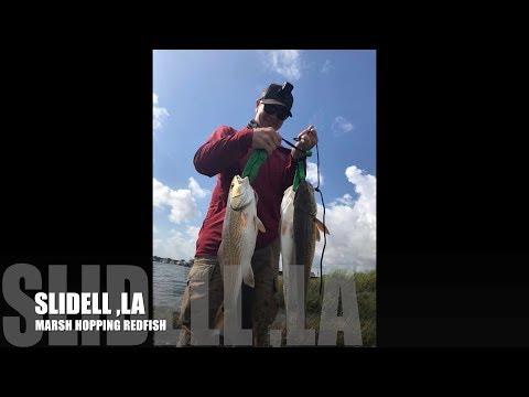 Marsh Hopping Redfish. Slidell Louisiana