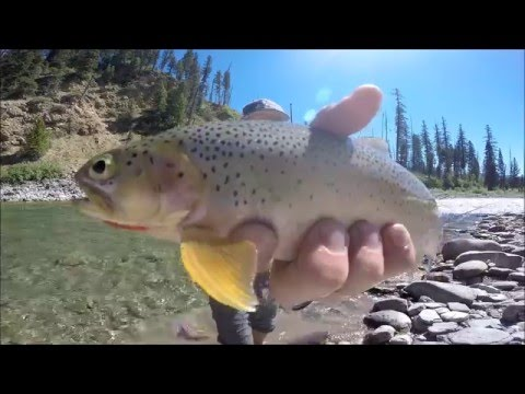 Fly Fishing Montana | The Bob Marshall Wilderness