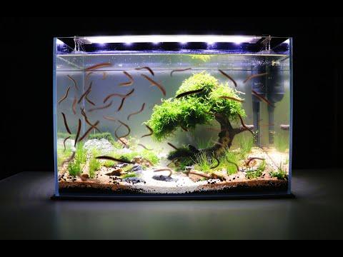 how-to-aquarium-setup,-aquascaping,-no-co2,-no-ferts,-with-filter-9.6-gallon-nano-tank