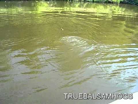 Lake 33 at busch wildlife youtube for Busch wildlife fishing
