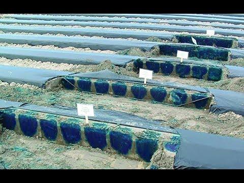 Webinar: Soil moisture sensors for greater insights into crop-water-soil dynamics