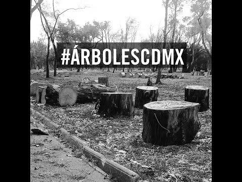#ÁRBOLESCDMX Tala de árboles en la ciudad