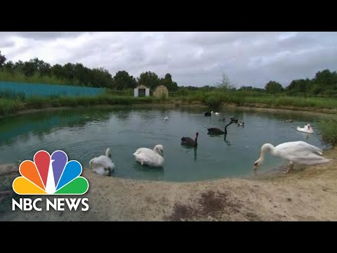 How This Bird Sanctuary Is Protecting Its Flock From Hurricane Florence | NBC News