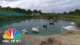 How This Bird Sanctuary Is Protecting Its Flock From Hurricane Florence   NBC News