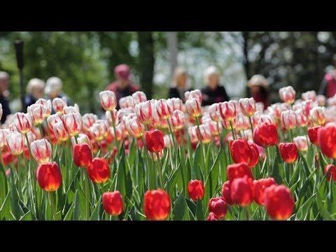Things to do in Ottawa / Quoi faire à Ottawa (60s) | Ottawa Tourism