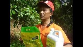 Pemakaian Herbafarm pd tanaman Cengkeh, 0811951963/081288881226