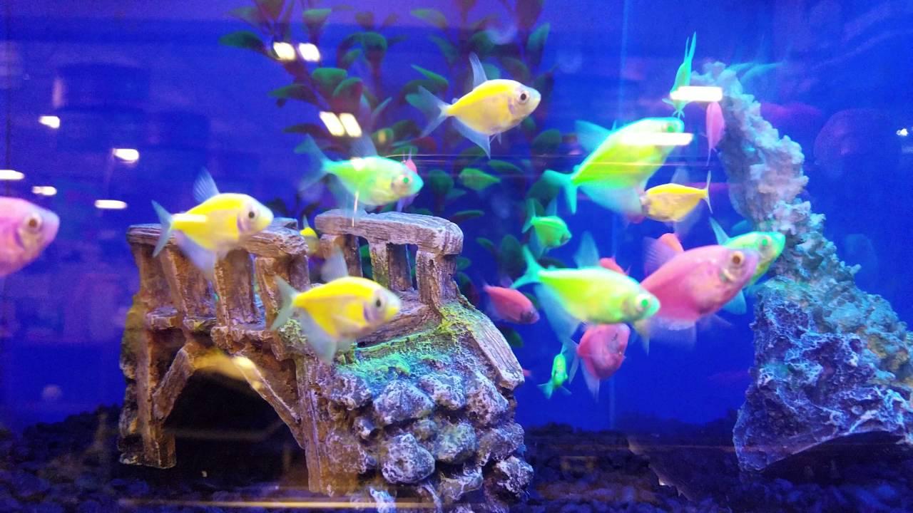 glow fish petsmart 4