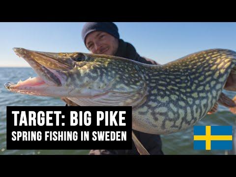 TARGET: BIG PIKE! Spring Fishing In Sweden, Cast Until You Drop 🤙🤙