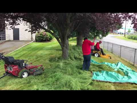 How to Clean up Overgrown Landscape and lawn
