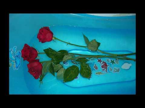 Как оживить завявшие розы