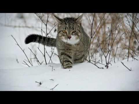 A B C die Katze lief im Schnee | Akkorde | Text | Melodie