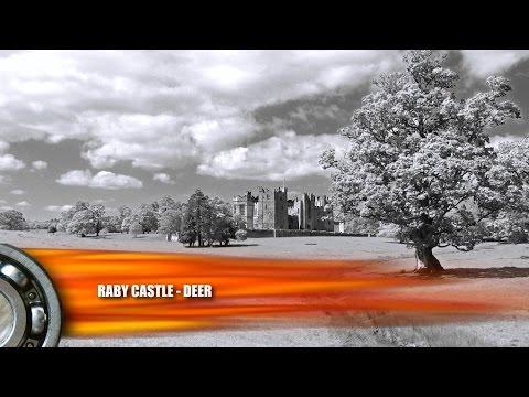 Deer Park - Raby Castle