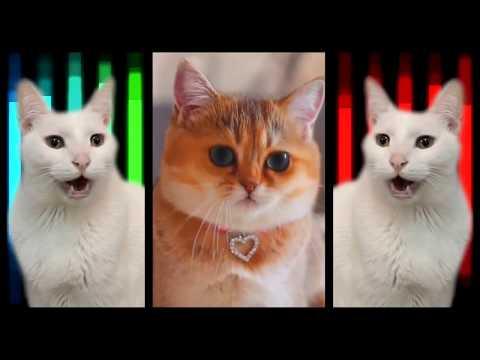 Cats Sing Beat It | Michael Jackson Cats Parody