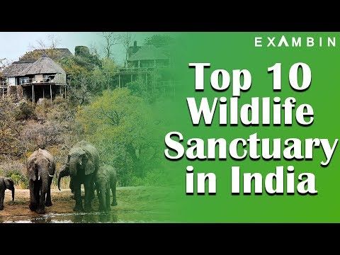 Top 10 Wildlife Sanctuaries in India UPSC   Wildlife Sanctuaries and National Parks Series - 3