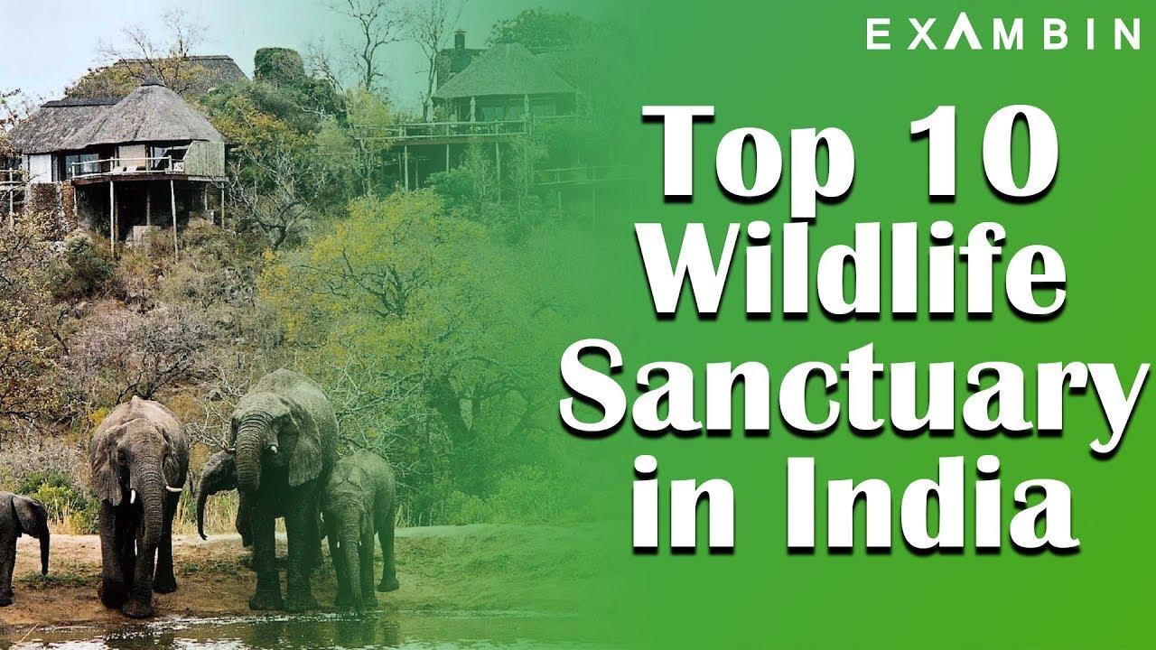 Wildlife Safari in Top 10 National Parks of India