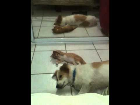 Cute kitten playing with dog