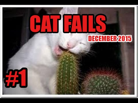 Thumbnail: FUNNY CAT VINES GONE WRONG COMPILATION 2016 - CAT FAILS COMPILATION #1