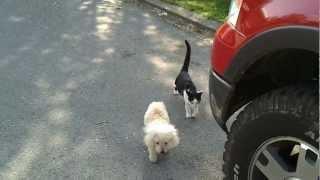 Cat Helps Dog