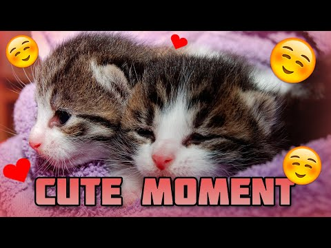 FUNNY AND CUTE CATS | MOMENTS #2