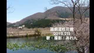 2013年2月、箱根湿性花園 にて.