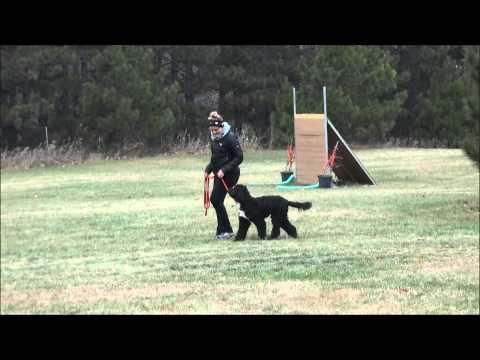 Jocko (Portuguese water dog) Boot Camp Level I. Dog Training Video