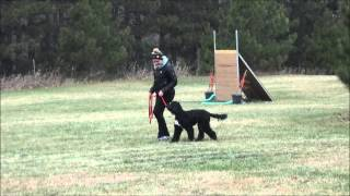 Jocko (portuguese Water Dog) Boot Camp Level I. Dog Training Video