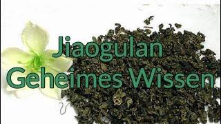 Gambar cover Jiaogulan das Wundermittel. Geheimes Wissen!