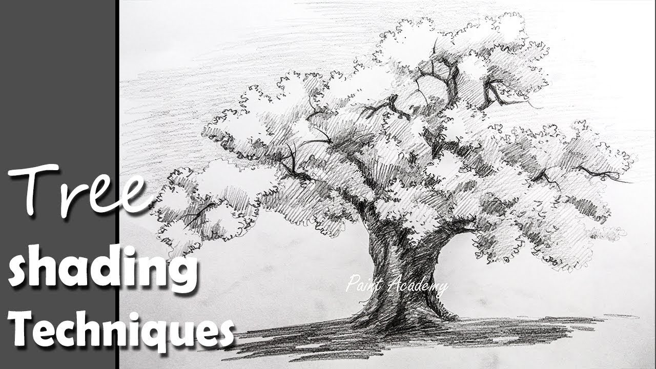 Pencil Drawing | How to Draw A Tree in Pencil with proper shading ...