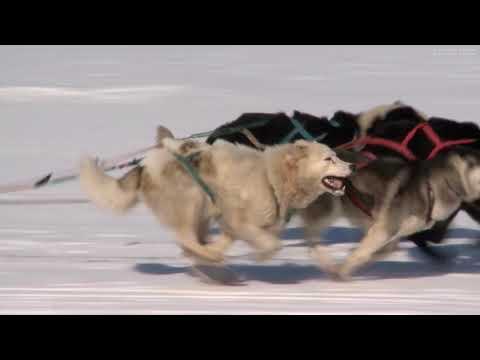 """Старт гонок на собачьих упряжках """"Надежда"""". Набережная села Лорино. 6 апреля 2019 года."""