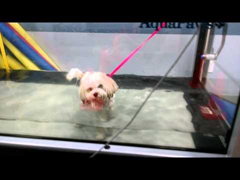 Spike in CVRC's underwater treadmill