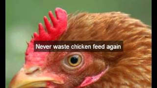 Chicken Feeders | San Bernardino |ca | Automatic Chicken Feeder | Feeding Chickens | Poultry Feeders