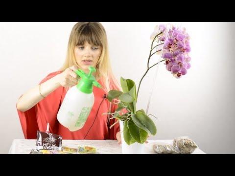 ВОЗДУШНЫЕ КОРНИ орхидеи. Что с ними делать / ОБРЕЗАТЬ или ЗАКОПАТЬ