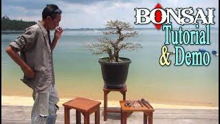 Bonsai Demo in a Beautiful Beach by Tedy Boy Indonesia