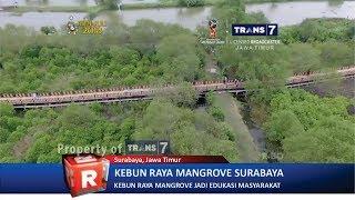 TRANS7 JATIM  Woww!! Kebun Raya Mangrove Surabaya Satu Satunya di Dunia