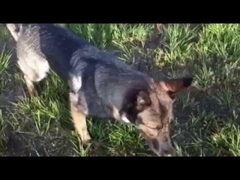RV Life | 6am dog play session | Solid K9 Training Dog Training