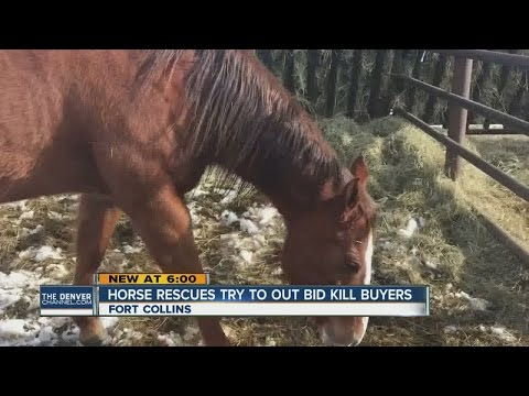 "Rescue groups outbid ""kill buyers"" at horse auction"