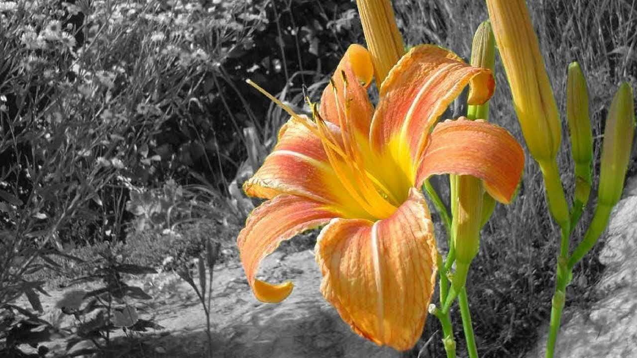 Color Part Of A Black And White Photo Using Photoshop Cc