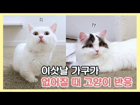 이삿날 가구가 없어질 때 고양이 반응