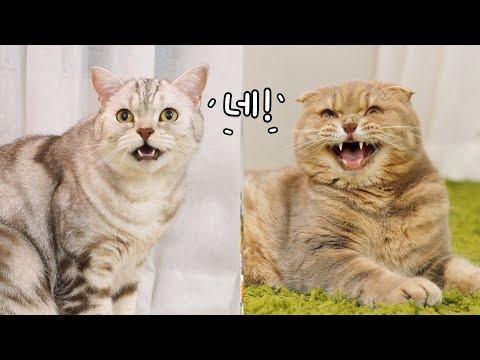 부르면 같이 대답하는 고양이 형제들 -귀욤-
