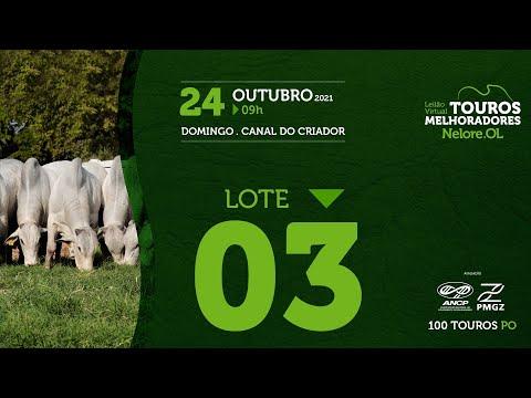 LOTE 3 - LEILÃO VIRTUAL DE TOUROS MELHORADORES  - NELORE OL - PO 2021