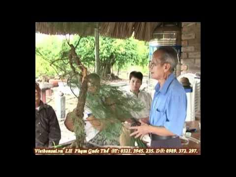 Vietbonsai.vn: Tạo hình nghệ thuật cho cây cảnh - P6
