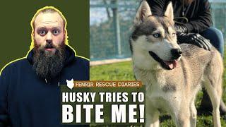 AGGRESSIVE HUSKY BITES DOG TRAINER  TRANSFORMATION