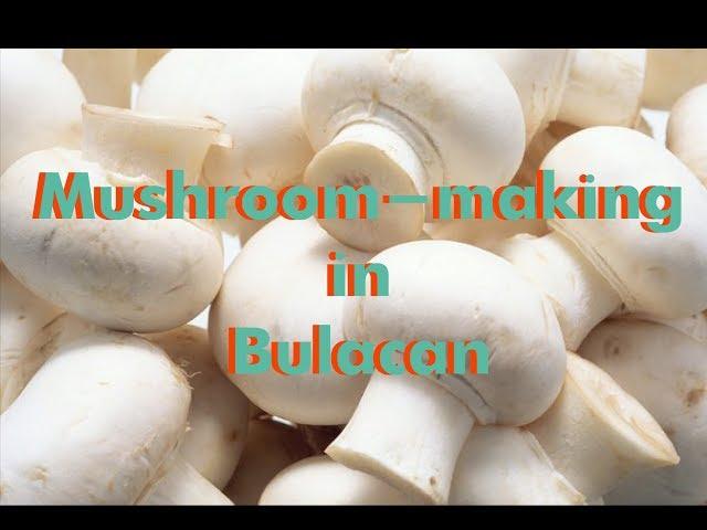 Local mushroom-making in Bulacan City