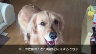ワンズハーツのWebサイト http://www.wans-hearts.com 犬臭くなりにくく...