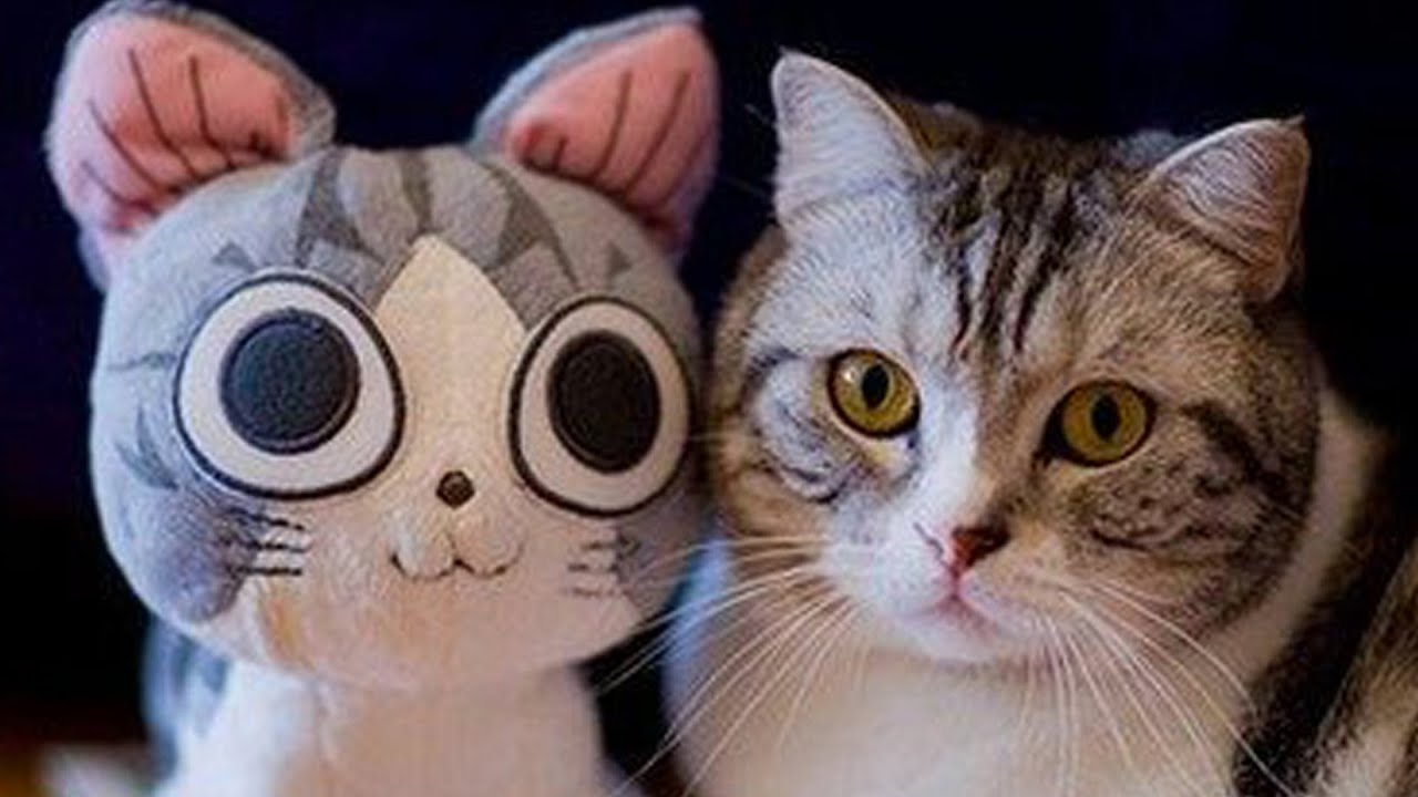 OH MY GOSH CUTE CATS