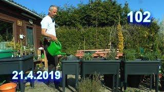 Ab in den Garten Kräuterbeete Giersch zieht ein ins Hochbeet / Erdbeer Rügen einfach vermehren